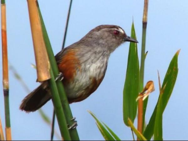 Ambasamudram photos, Mundanthurai Tiger Reserve - A Bird