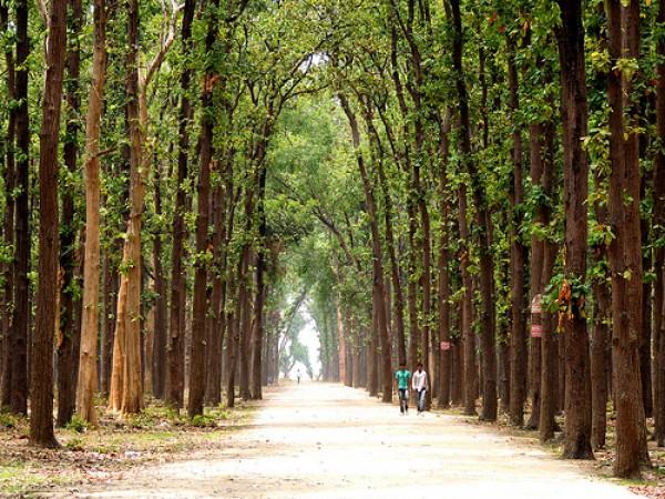 Gorakhpur photos, Kushmi Forest - Thick and Lush Forest