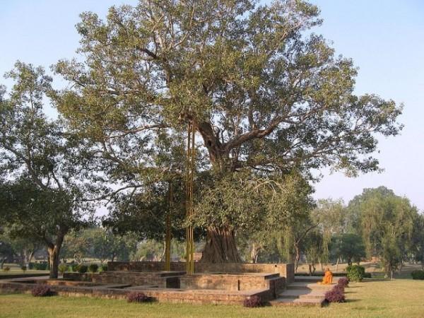 Sravasti photos, Jetavana Monastery - Anandabodhi