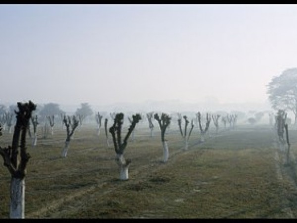 Agra photos, Mehtab Bagh - A misty view  .