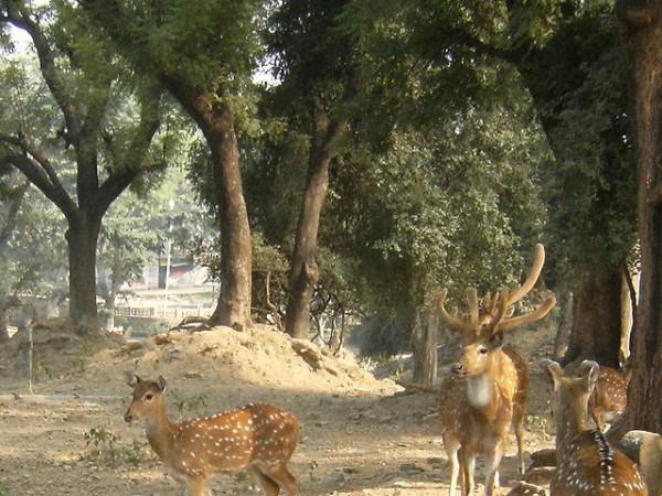 Sarnath photos, Deer Park - An adorable picture of deers