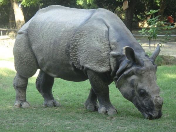 Kanpur photos, Allen Forest Zoo - A rhinosaur sculpture.