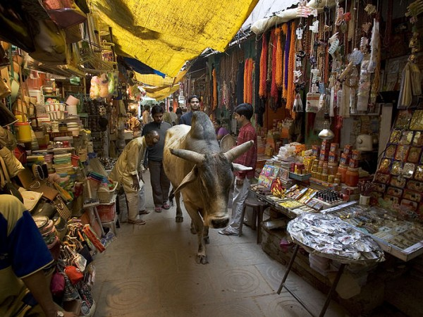 Varanasi photos, Holy cow roaming freely in Market