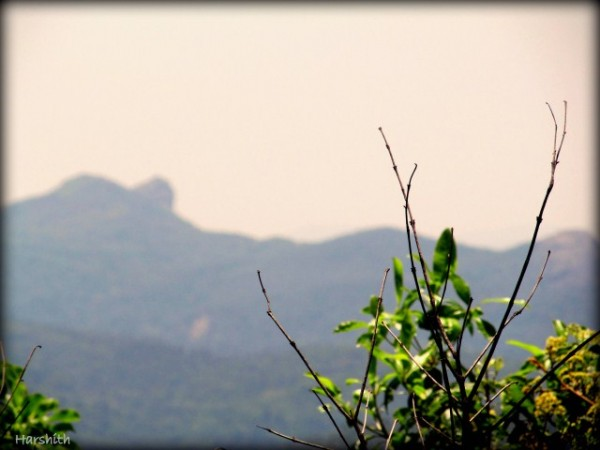 Chikmagalur photos, Mullayanagiri Range - The lush green hilly range.