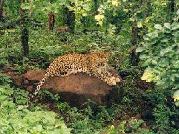Bhopal photos, Van Vihar -  A Panther