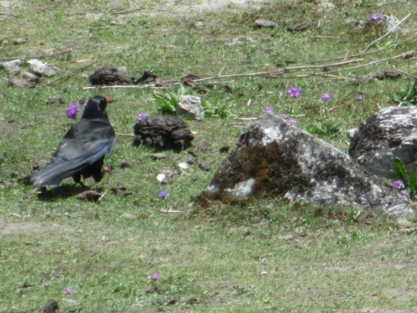 Gangtok photos, Bird