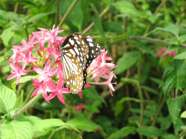 Bannerghatta photos,A Butterfly
