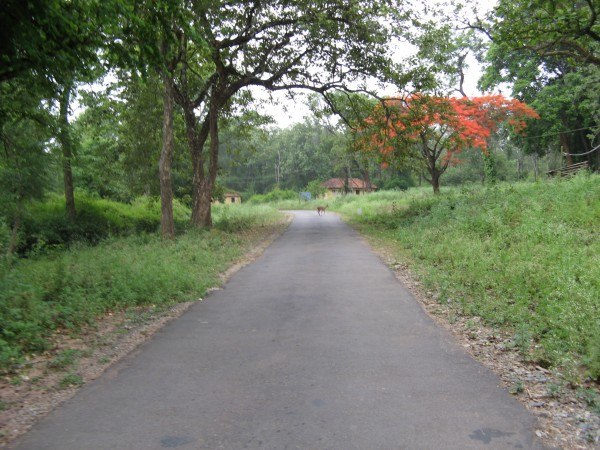 Nagarhole photos, Pathway Amidst Forest
