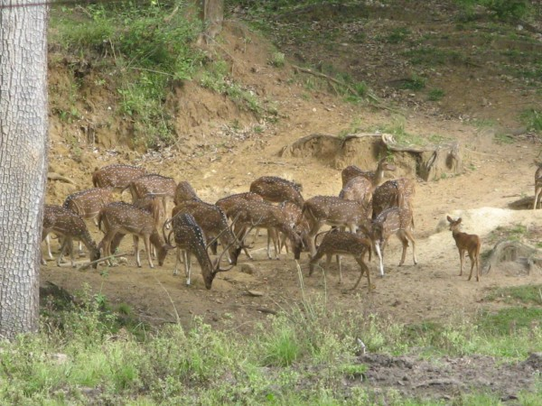 Nagarhole photos, A group of deers
