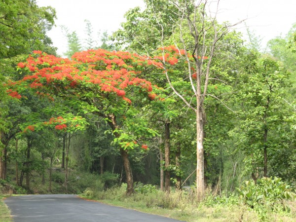 Nagarhole photos, Orange Flowers