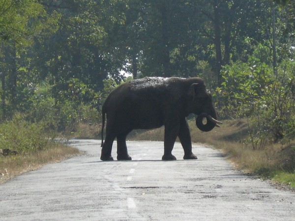 Nagarhole photos, Elephant crossing a path