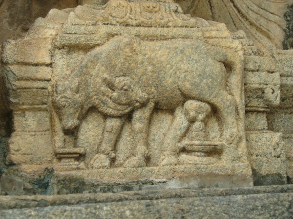 Talakadu photos, Two-headed cow