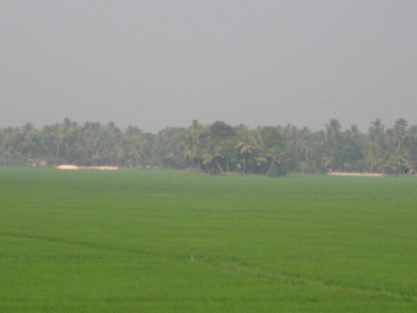 Kottayam photos, Kottayam fields