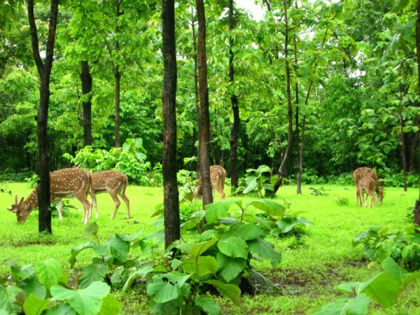 Silvassa photos, Satmaliya Deer Park - Herd of Deer