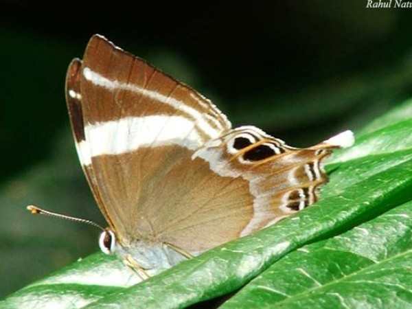 Namdapha National Park photos, Butterfly