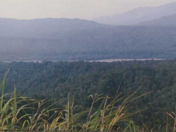 Namdapha National Park photos, Greenery
