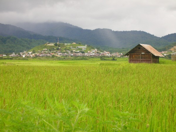 Ziro photos, Green Fields of Ziro