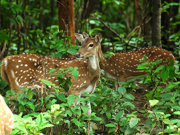 Jamshedpur photos, Dalma Wildlife Sanctuary -  a  view of the sanctuary