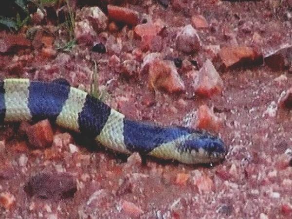 Jashpur photos, Snake Park - A Snake
