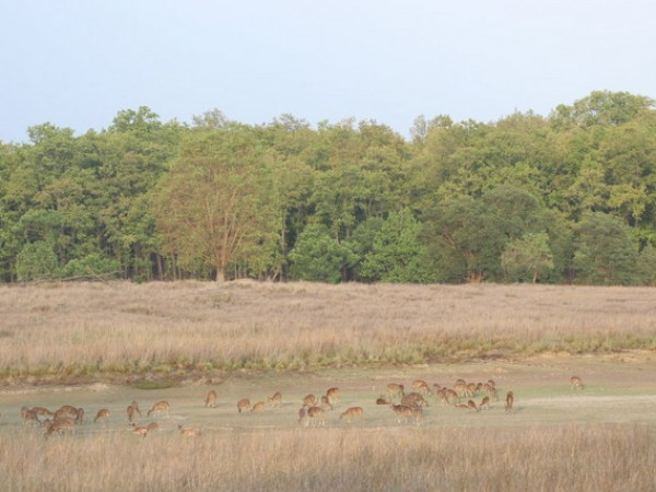 Bilaspur photos, Achanakmar Wildlife sanctuary - Deers