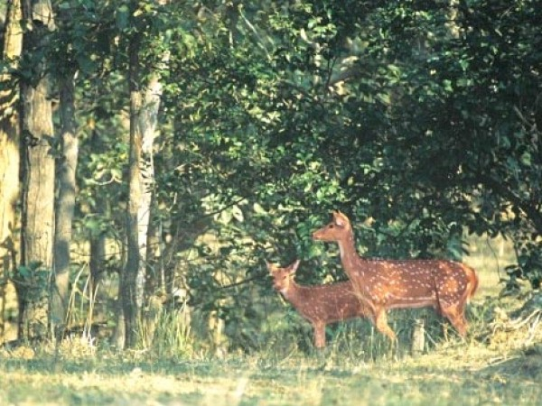 Bilaspur photos, Deer