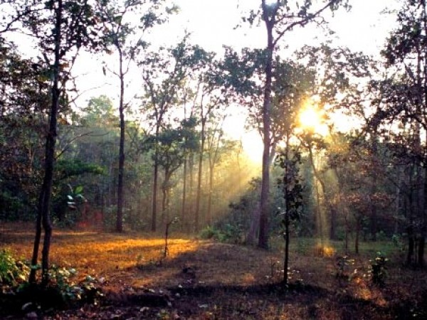 Bilaspur photos, Forest