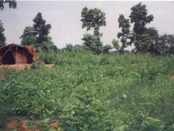 Surguja photos, Crops
