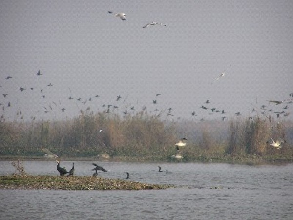 Ferozepur photos, Harike Wetland - An image of the birds