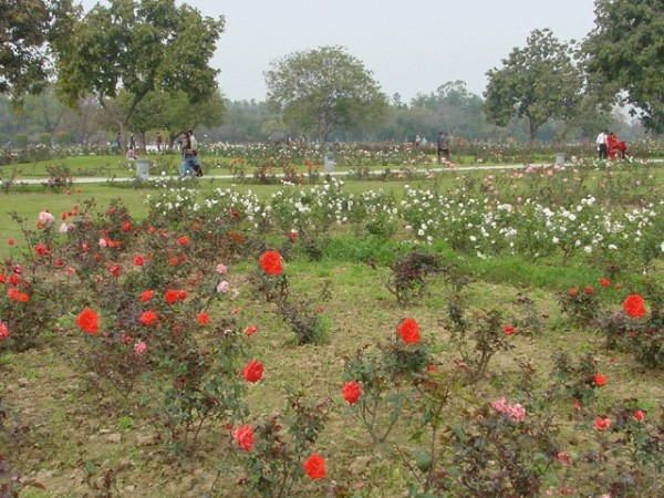 Chandigarh photos, Rose Garden - Largest Rose Garden