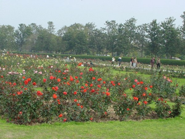 Chandigarh photos, Rose Garden - 1600 varieties of Roses