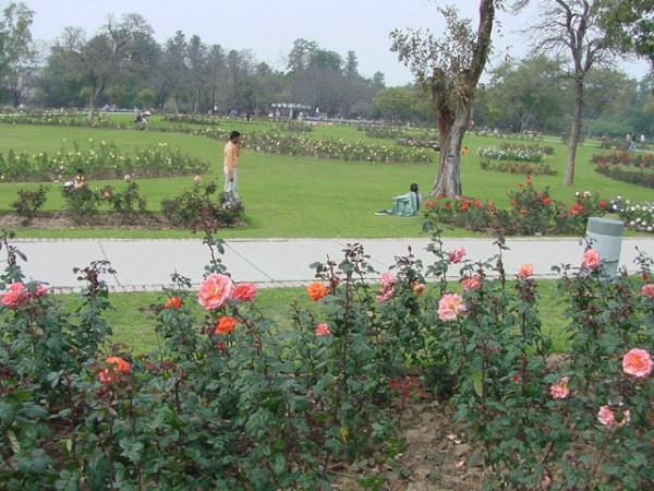 Chandigarh photos, Rose Garden - Roses