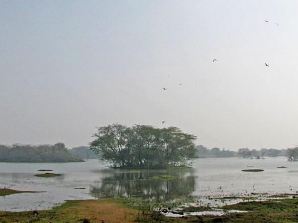 Gurgaon photos, Sultanpur Bird Sanctuary - Scenic view