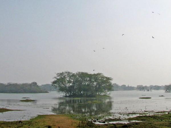 குர்கான் புகைப்படங்கள் - சுல்தான்பூர் பறவைகள் சரணாலயம்