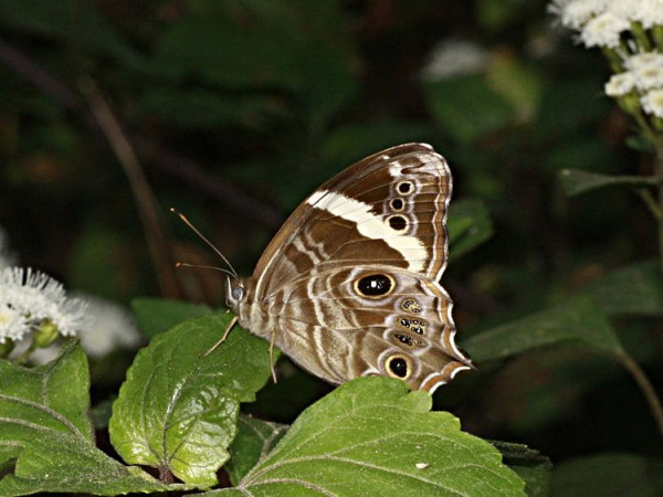 Panchkula photos, Morni Hills - Butterfly