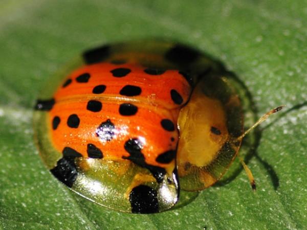 Panchkula photos, Morni Hills - Ladybird