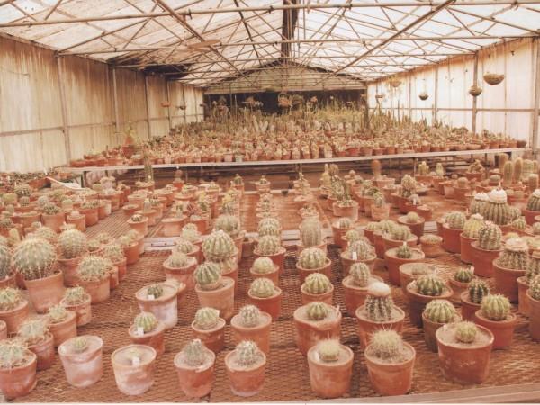 Panchkula photos, Cactus Garden - Cactus