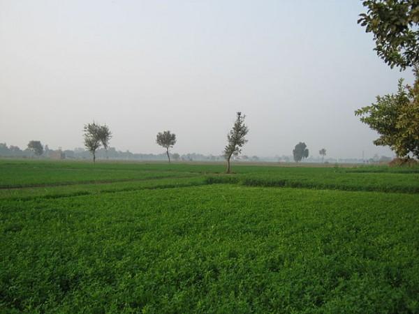Sonipat photos, Green Fields