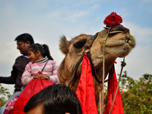 Faridabad photos, Surajkund - Camel Ride
