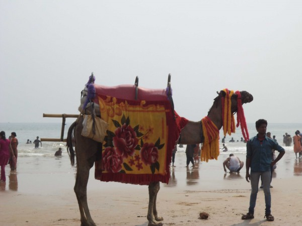 Puri photos, Puri Beach - Adorned Camel