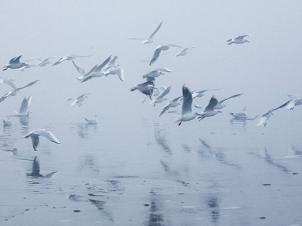 Chilika photos, Chilka Lake - Ibis birds