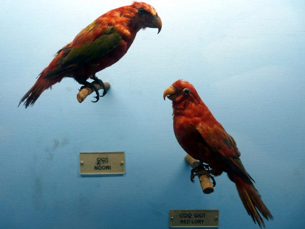 Bhubaneshwar photos, Orissa State Museum - Birds at the museum