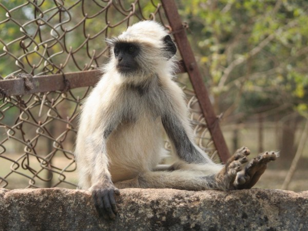 Bhubaneshwar photos, Nandankanan Zoo - Wildlife