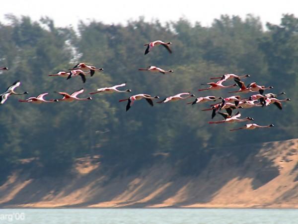 Chilika photos, Chilka Lake - Flamingos