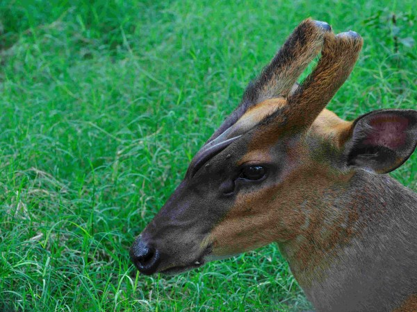 Kolkata photos, Alipore Zoo - A Deer at the Zoo