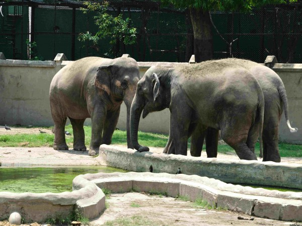 Kolkata photos, Alipore Zoo - The Elephants