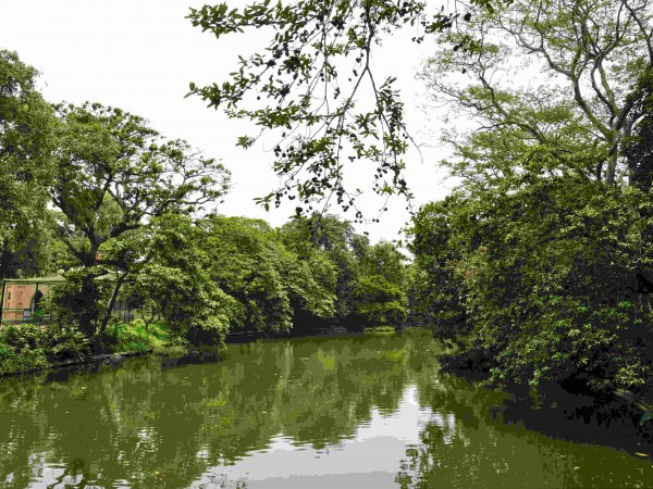 Kolkata photos, Alipore Zoo - The Beautiful Greenery