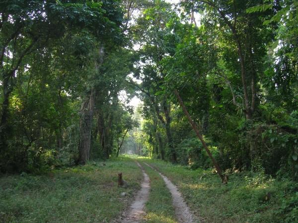 Chalsa photos, Gorumara National Park - a beautiful greenery inside the park