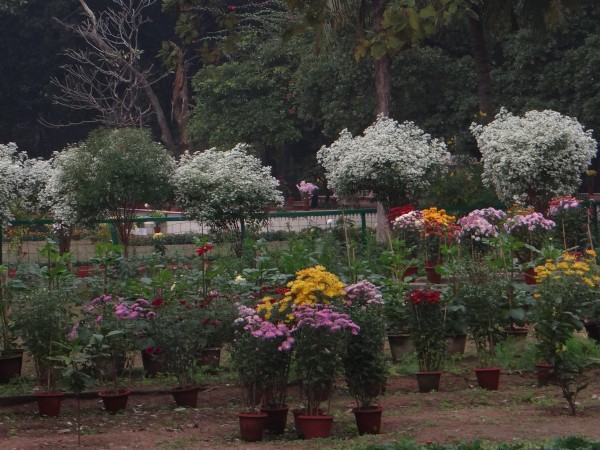Santiniketan photos, The Beautiful Flowers
