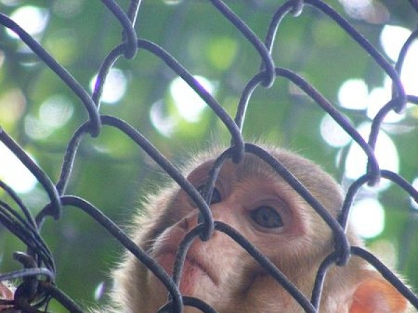 Patna photos, Patna Zoo - Monkey