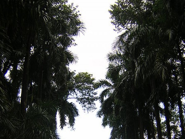 Howrah photos, Indian Botanical Gardens - Beautiful walkway